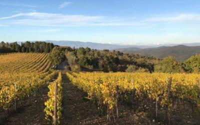 Weinlese in der Toskana (8)