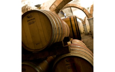 Weinprobe in der Burg (3)