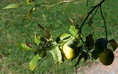 Bio Agriturismo Pomarance 2 (16)