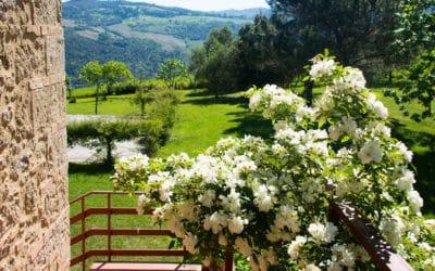 Bio Agriturismo Pomarance 2 (20)