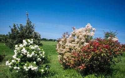 Bio Agriturismo Pomarance 3 (38)