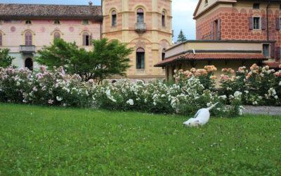 Villa_Comano_(5)