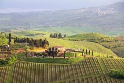 Weinberge und 25 Kellereien in Terricciola © Toscana Forum