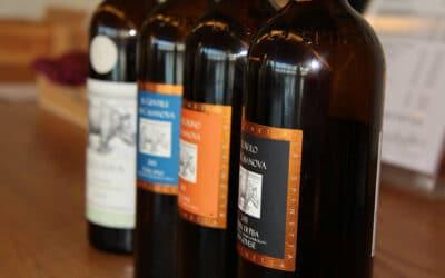 Tennisurlaub Toskana, Weinprobe (30)