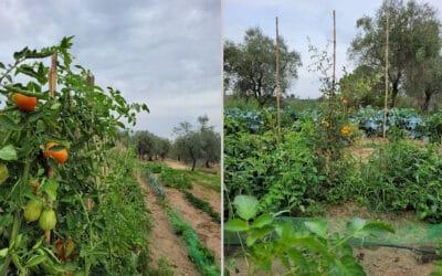 Landgut Terricciola Bio-Gemüsegarten (1)