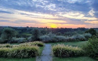 Landgut Terricciola Sonnenuntergang (3)